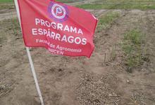 Agronomía impulsa la producción y consumo de hortalizas