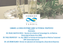Cannabis: la ciencia responde sobre su potencial terapéutico