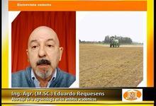 Agronomía: abordaje de la agroecología en ámbitos académicos