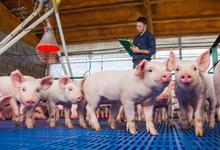 Maestría en Gestión Integral de Granjas Porcinas de Veterinarias