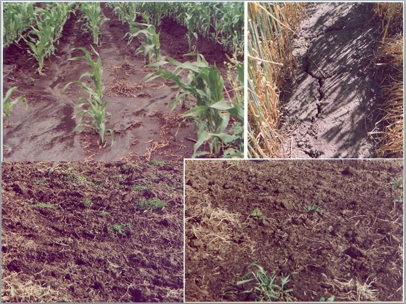 Degradaci n de suelos unicen for Cambiar el suelo de un piso